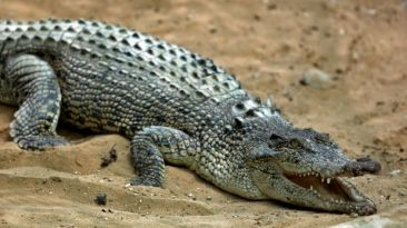 Mujer se suicida lanzándose a un estanque lleno de cocodrilos