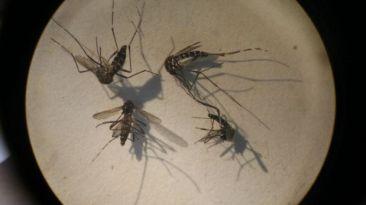 Sisol dispone alerta verde ante casos de fiebre chikungunya