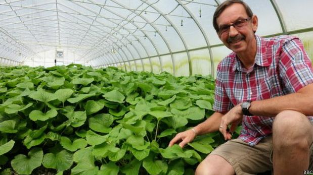 ¿Cuál es la planta más difícil de cultivar del mundo?