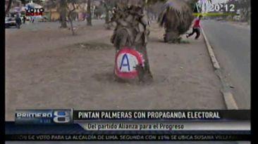Comas: Alianza para el Progreso pintó palmeras con su logo