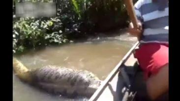 Una aterradora anaconda gigante en la selva de Brasil [VIDEO]