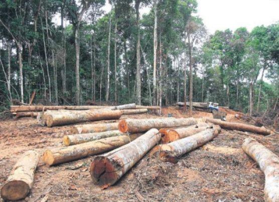 Hay 49 comunidades nativas sin título expuestas a tala ilegal