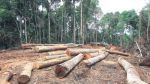 Hay 49 comunidades nativas sin título expuestas a tala ilegal - Noticias de paro agrario