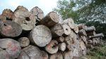 La tala de árboles y el panorama que deja en Ucayali [Fotos] - Noticias de tala de árboles