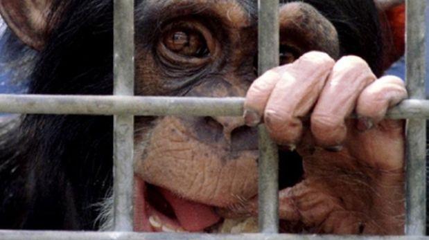 Brasil reemplazará experimentos en animales con nuevos métod