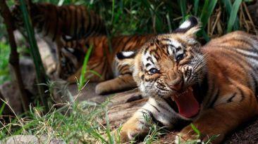 Más de la mitad de la fauna salvaje ha desaparecido en 40 años