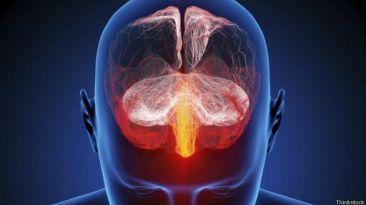 ¿Son realmente diferentes los cerebros de hombres y mujeres?