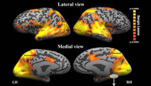 ¿Cómo reacciona tu cerebro cuando ve una película?