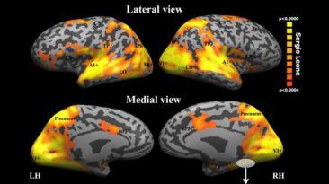 ¿Cómo reacciona tu cerebro cuando ves una película?
