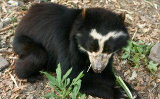 Chaparrí: Un bosque de osos para disfrutar en familia