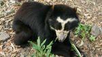 Chaparrí: Un bosque de osos para disfrutar en familia - Noticias de