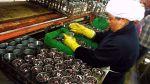 SNI: Cinco conserveras y congeladoras cerraron sus plantas - Noticias de pesca de anchoveta