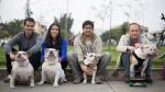 Biuf, el perro skater, ahora es profesor - Noticias de melissa garcia