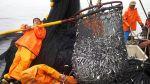 Captura máxima de anchoveta será de 375 mil toneladas en el sur - Noticias de resolución ministerial