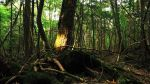 Descubre Aokigahara, el bosque de los suicidas - Noticias de suicidios