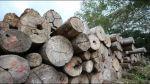 Comunidad nativa firma primer convenio maderero sostenible - Noticias de tala de árboles