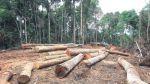 El comercio de madera ilegal movió S/.374 mlls. en 5 años - Noticias de un millon de pie