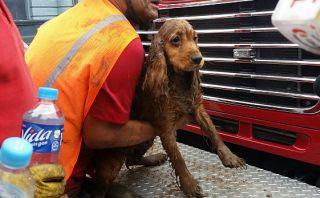 Perrita rescatada de casona de plaza Dos de Mayo 2 días después