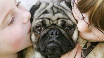 ¿Cuándo se debe considerar desahuciar a una mascota?