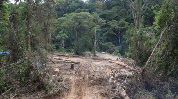 Ucayali: ordenan a maderera paralizar la depredación de bosques