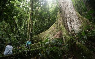 Perú Natural: un recorrido por Pampa Hermosa