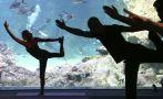 Mira el cuerpo haciendo yoga bajo los rayos X