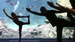 Mira el cuerpo haciendo yoga bajo los rayos X - Noticias de