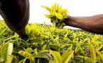 Gana hasta US$10 mil por desarrollar una app para agricultura
