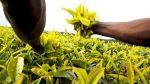 Agricultura moderna casi duplicó puestos de empleo en 10 años - Noticias de empleos