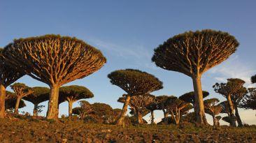 Conoce esta sorprendente isla encantada en Yemén