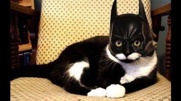 Halloween: 12 disfraces para mascotas que no debes dejar de ver