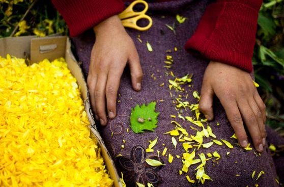 Deslúmbrate con la ruta de las flores y Semana Santa de Tarma