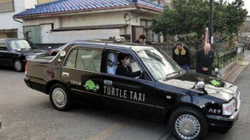 """Crean los """"Taxis Tortuga"""" en Japón"""