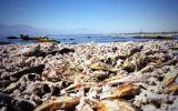 """Salton Sea, el apocalíptico """"mar muerto"""" de California"""