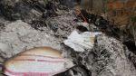 Huancayo: JEE anuló elecciones en el distrito de Quichuay - Noticias de elecciones municipales 2014