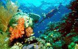 Plan para salvar la Gran Barrera de Coral tendría fallas