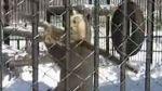 ¿Kung Fu Panda es real?: en este video parece que sí - Noticias de internet