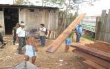 Ucayali: Decomisan madera ilegal valorizada en S/. 30.000