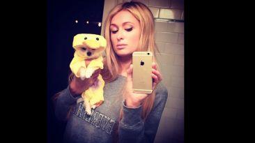 Instagram: el perro de Paris Hilton que cuesta US$13 mil