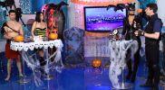Halloween: Karen Schwarz se disfrazó de sensual Gatúbela