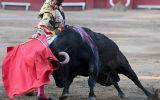 ¿Los toros no sufren?, por Martha Meier Miró Quesada