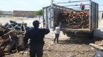 La Libertad: incautan 1.500 m3 de madera de eucalipto - Noticias de huamachuco