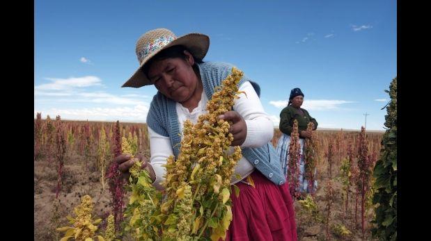 La quinua peruana superará las 200 mil toneladas hacia el 2020