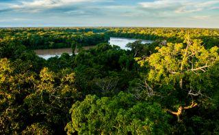 Riqueza natural: Descubre la Reserva Nacional Tambopata