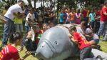 Salvando a un gigante: el manatí amazónico - Noticias de melissa garcia