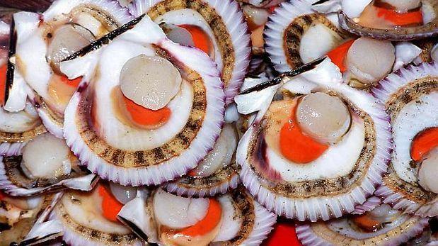 Se perjudican envíos de conchas de abanico por Fenómeno El Niño
