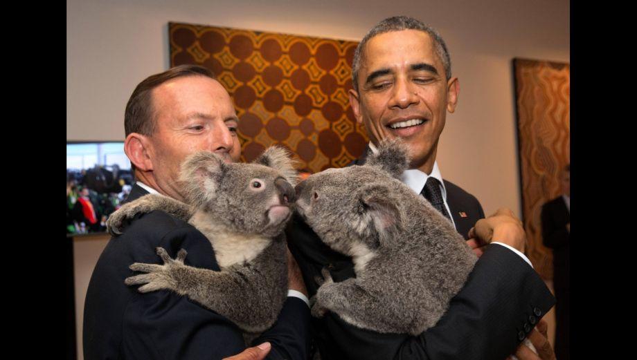 G20: Los koalas que se robaron el show durante la cita mundial