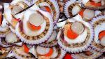 El Niño costero afecta 80% de producción de conchas de abanico - Noticias de carlos posada
