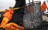 ¿Habrá anchoveta para una segunda temporada de pesca?