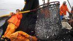 La escasez de anchoveta afecta a los pesqueros industriales - Noticias de humberto speziani